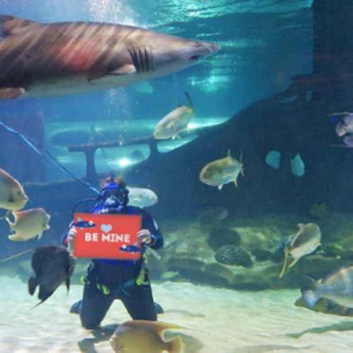 Underwater Valentine's Day Video Greetings