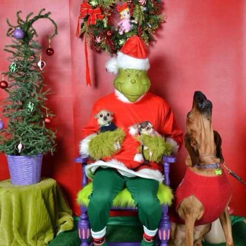 Pet Photos with the Grinch