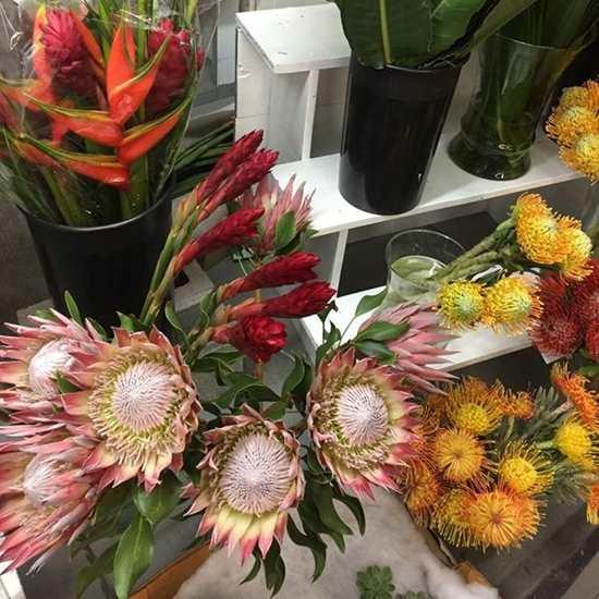 Allied Cut Flowers