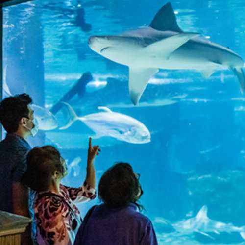 Mother's Day Weekend @CLEAquarium