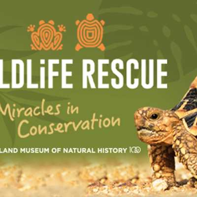 Wildlife Rescue: Miracles in Conservation