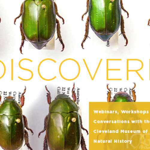 DiscoverE: Taxonomy 101:  From Discovery to Species Description