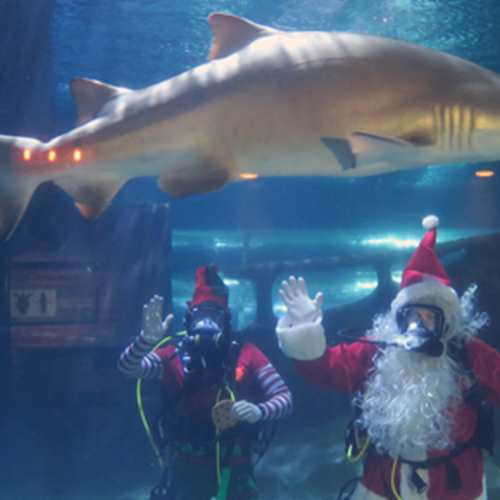 Scuba Claus Meet & Greet Days