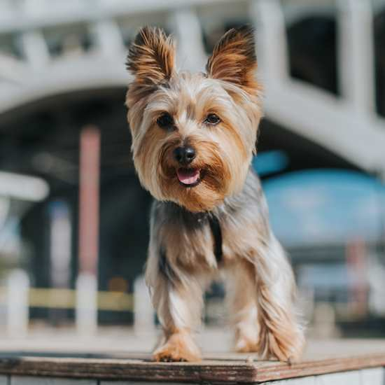 Dogs in CLE: Pet-Friendly Hotels